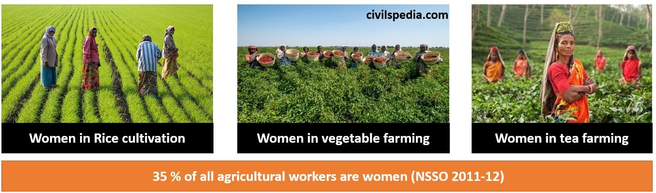 Feminisation of Agriculture